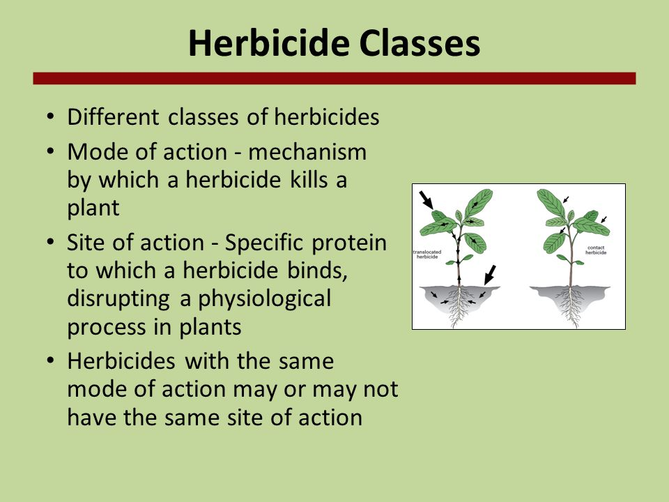 Herbicide Classes Different classes of herbicides