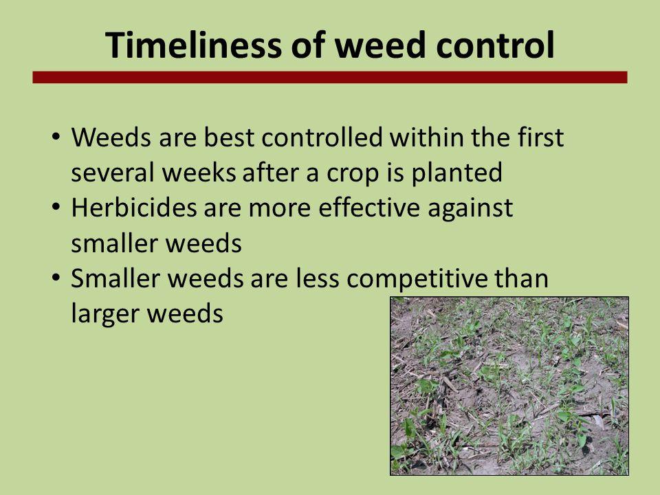 Timeliness of weed control