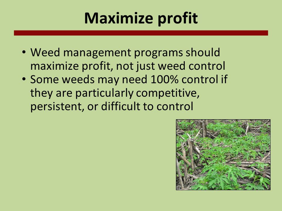 Maximize profit Weed management programs should maximize profit, not just weed control.