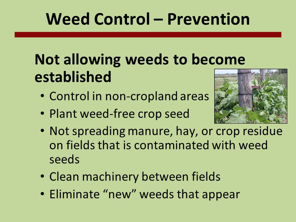 Weed Control – Prevention