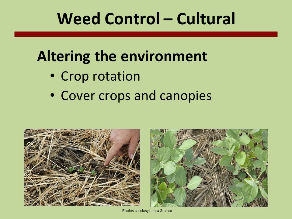 Weed Control – Cultural