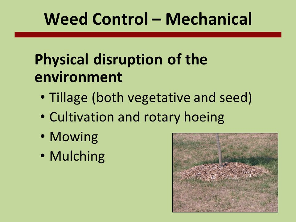 Weed Control – Mechanical