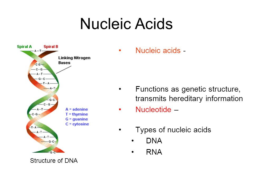 Nucleic Acids Nucleic acids - macromolecule containing hydrogen, oxygen, nitrogen, carbon, and phosphorous.