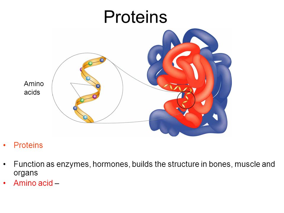 Proteins Amino. acids. Proteins macromolecule that contains carbon, hydrogen, oxygen, and nitrogen.