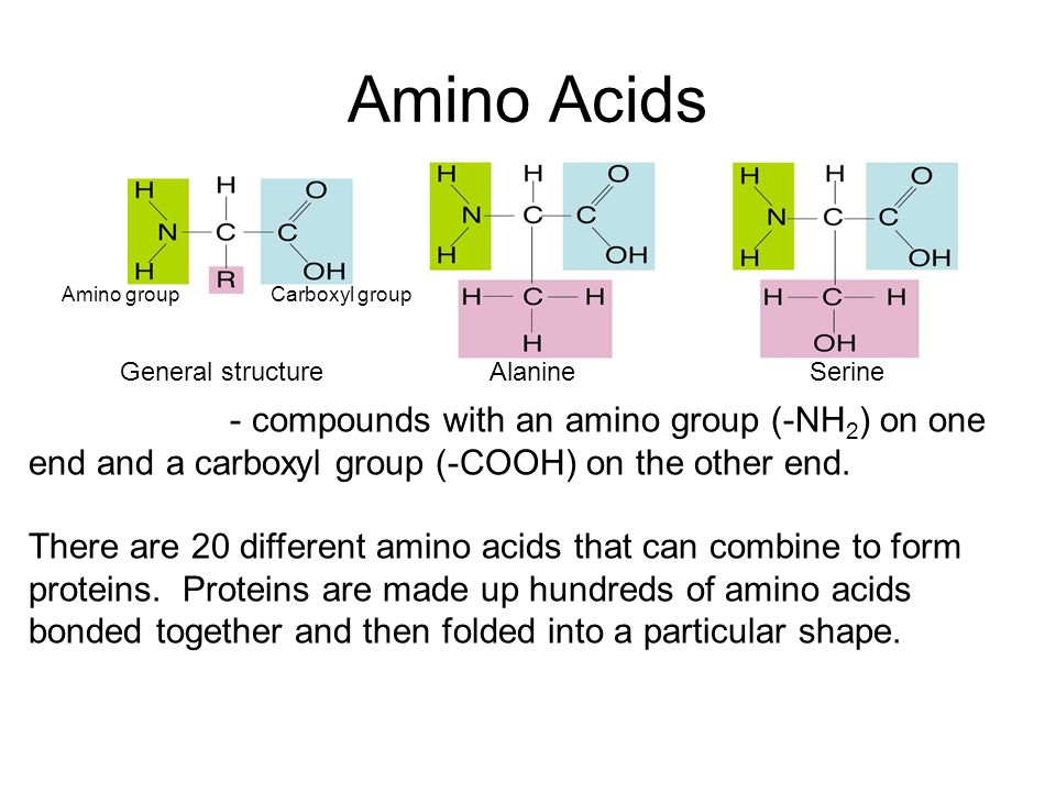 Amino Acids Amino group. Carboxyl group. General structure. Alanine. Serine.