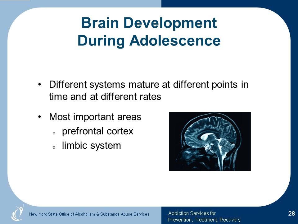 Brain Development During Adolescence