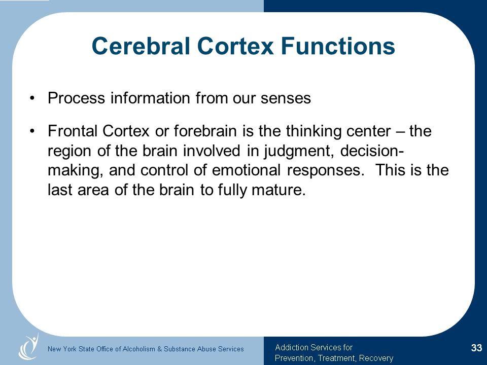 Cerebral Cortex Functions