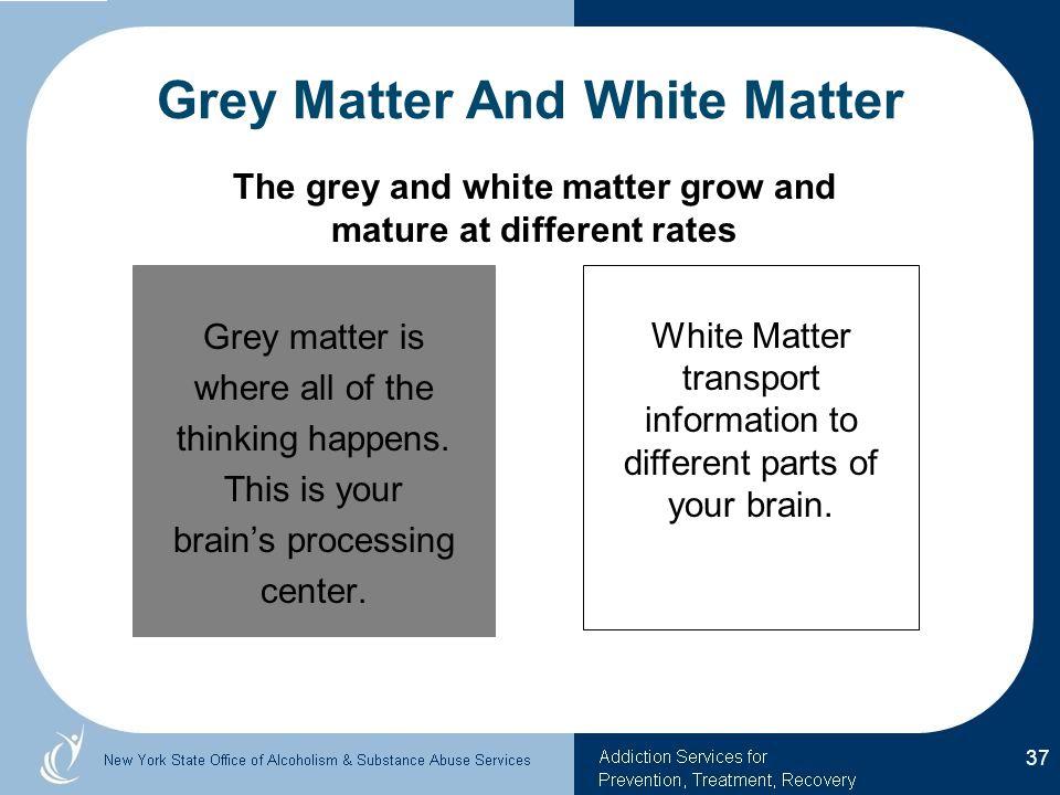 Grey Matter And White Matter