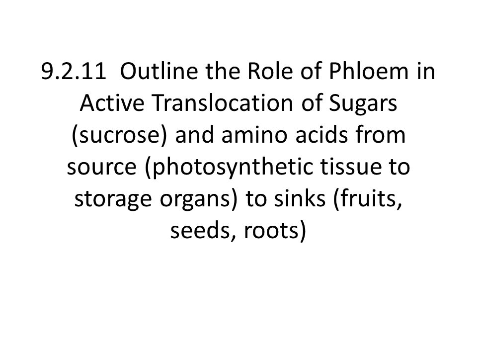 9.2.11 Outline the Role of Phloem in Active Translocation of Sugars (sucrose) and amino acids from source (photosynthetic tissue to storage organs) to sinks (fruits, seeds, roots)