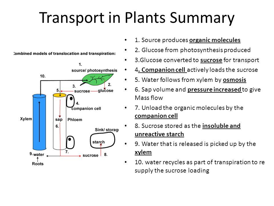 Transport in Plants Summary