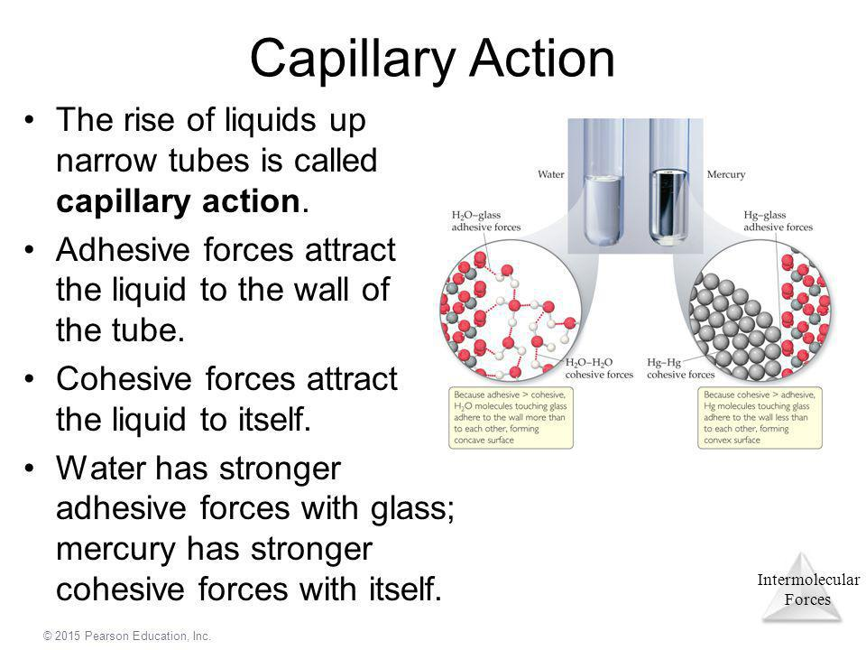 Capillary Action The rise of liquids up narrow tubes is called capillary action. Adhesive forces attract the liquid to the wall of the tube.