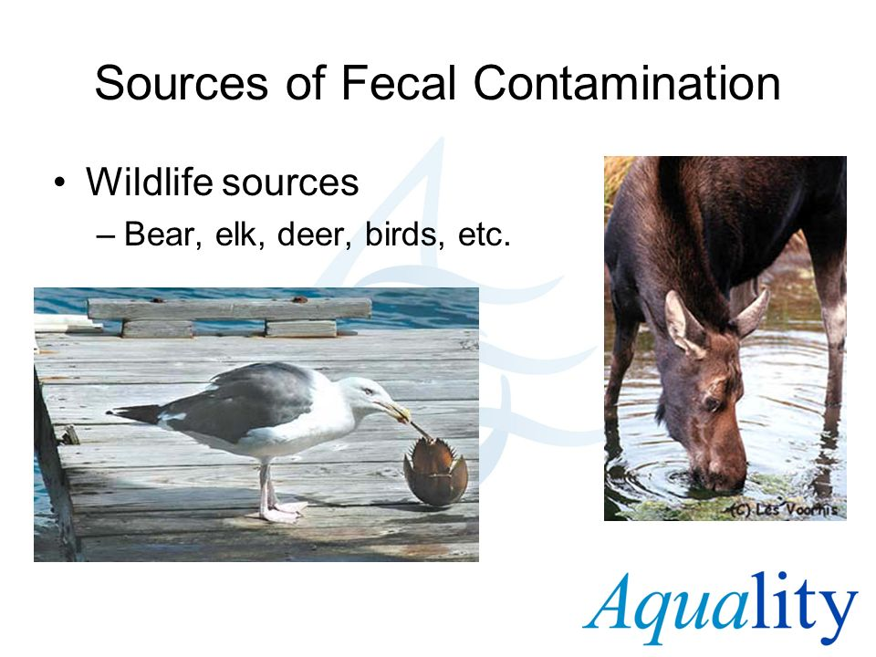 Sources of Fecal Contamination