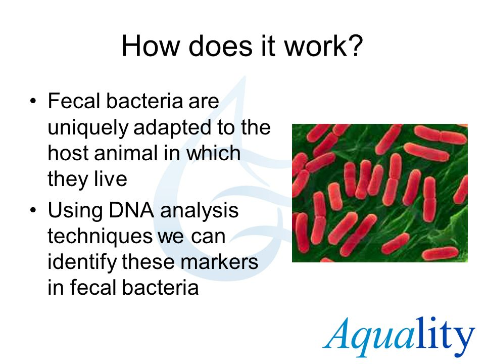 How does it work Fecal bacteria are uniquely adapted to the host animal in which they live.