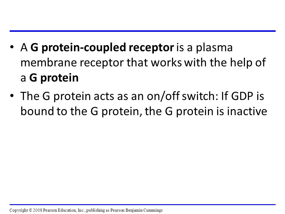 A G protein-coupled receptor is a plasma membrane receptor that works with the help of a G protein