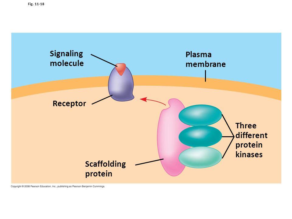Signaling Plasma molecule membrane Receptor Three different protein