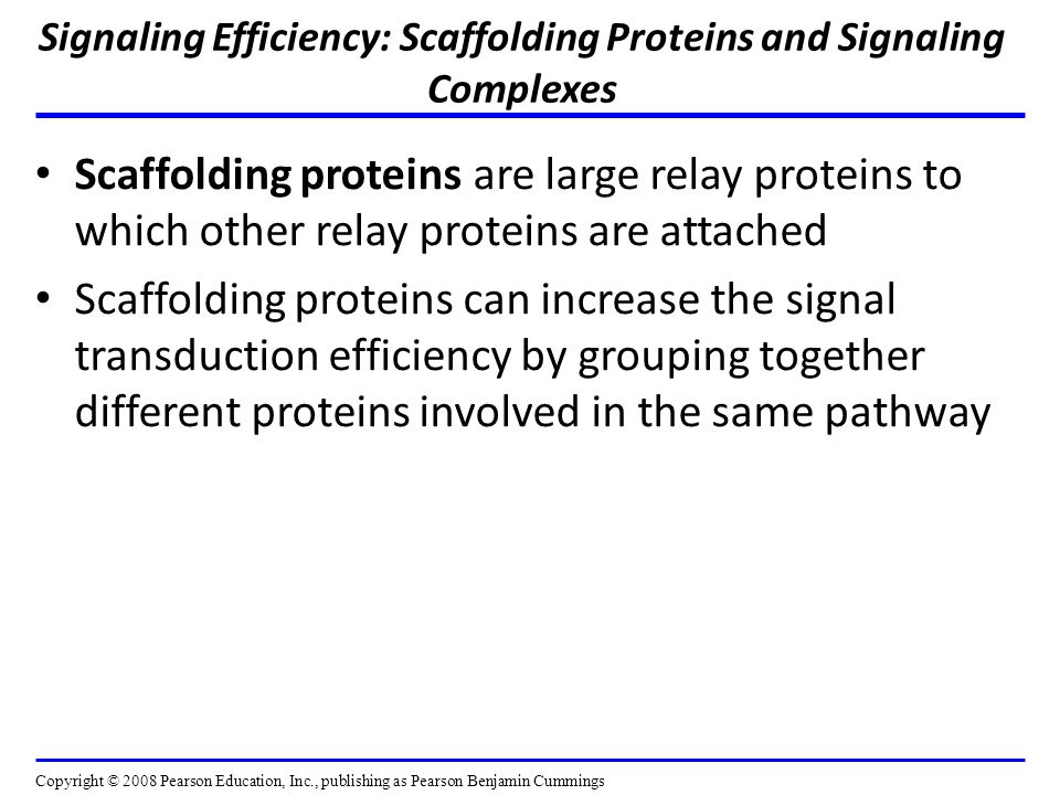 Signaling Efficiency: Scaffolding Proteins and Signaling Complexes