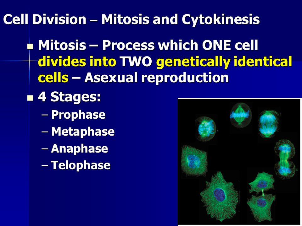 Cell Division – Mitosis and Cytokinesis