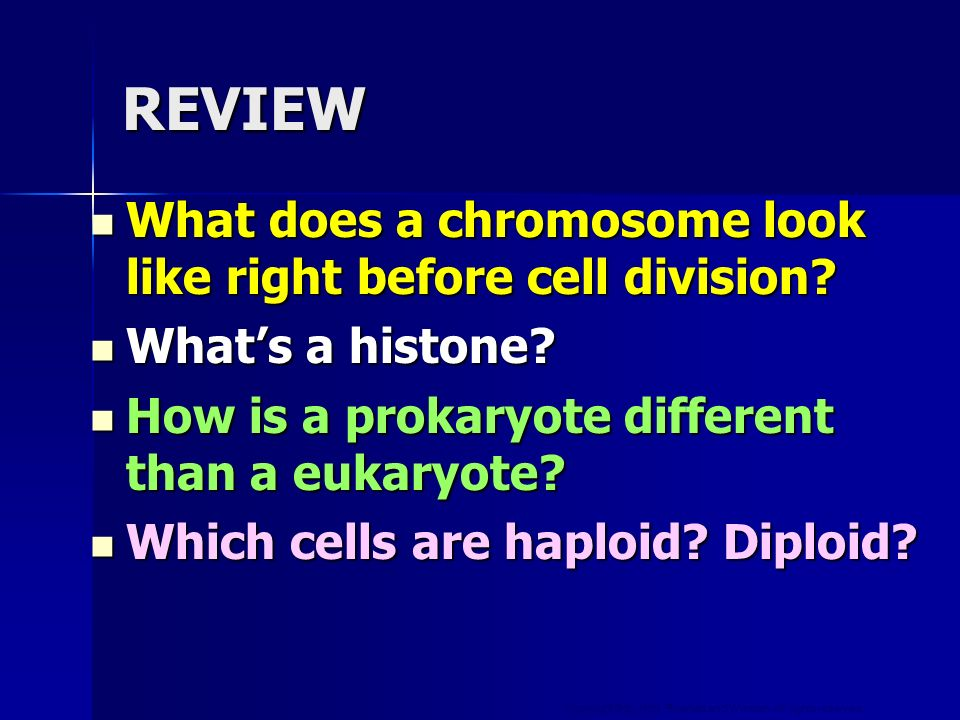 REVIEW What does a chromosome look like right before cell division