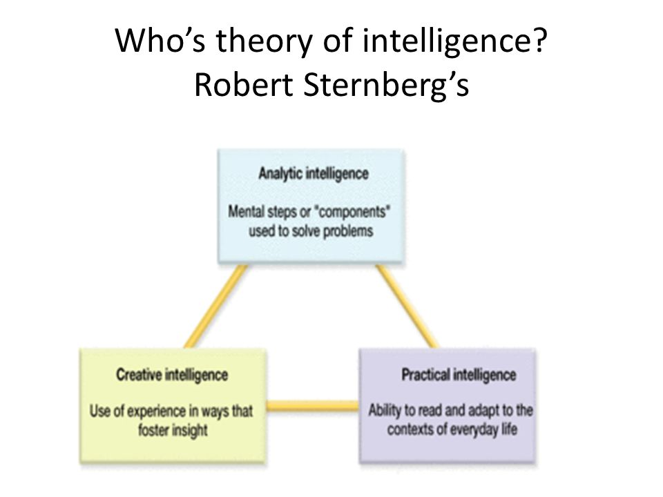 Who's theory of intelligence Robert Sternberg's