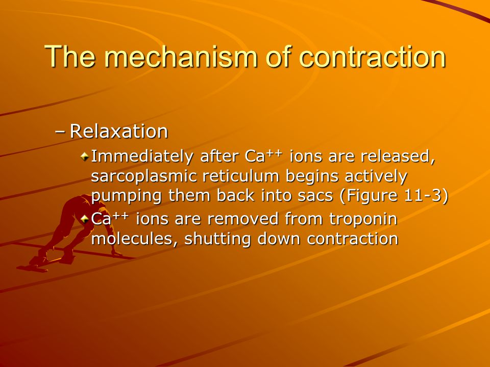 The mechanism of contraction