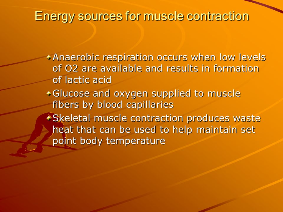 Energy sources for muscle contraction