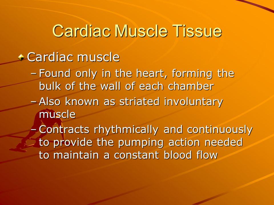 Cardiac Muscle Tissue Cardiac muscle