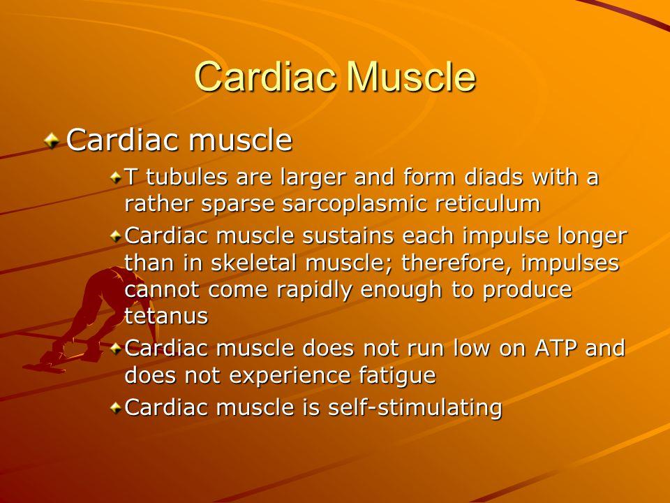 Cardiac Muscle Cardiac muscle