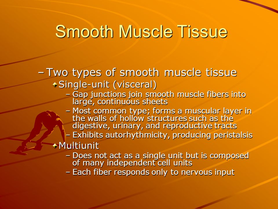 Smooth Muscle Tissue Two types of smooth muscle tissue