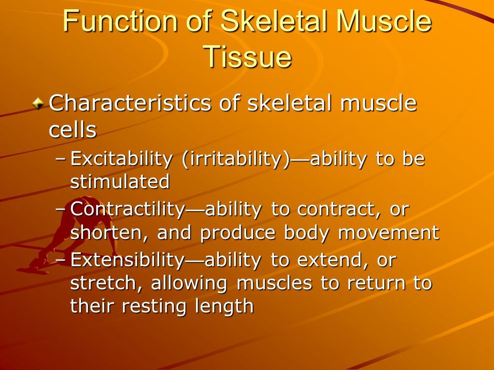 Function of Skeletal Muscle Tissue