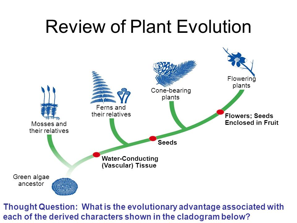 Review of Plant Evolution