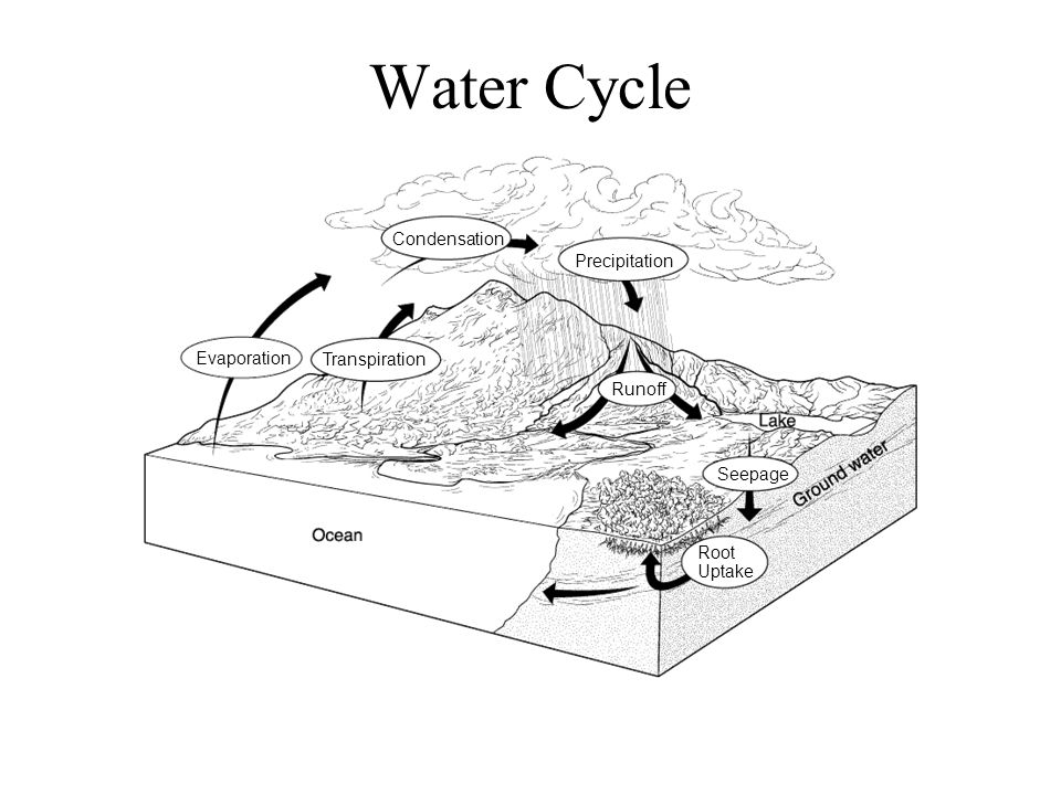 Water Cycle Condensation Precipitation Evaporation Transpiration