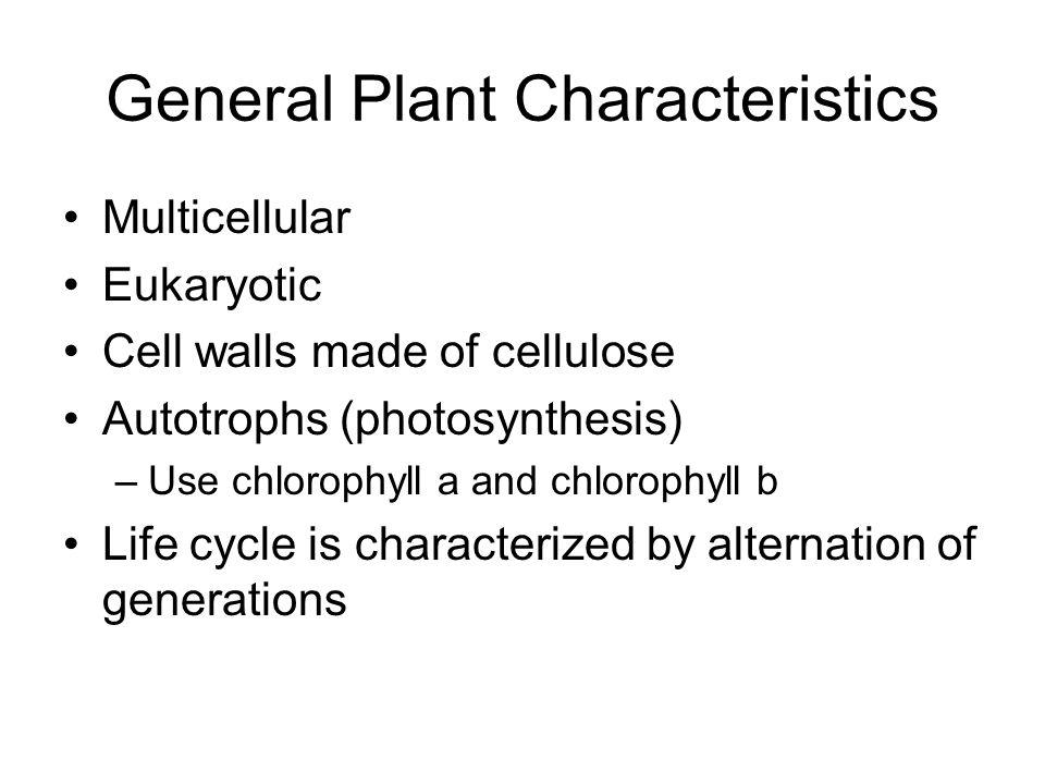 General Plant Characteristics