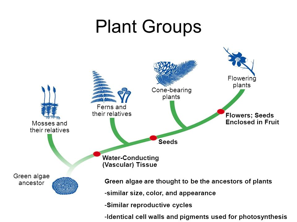 Plant Groups Flowering plants Cone-bearing plants