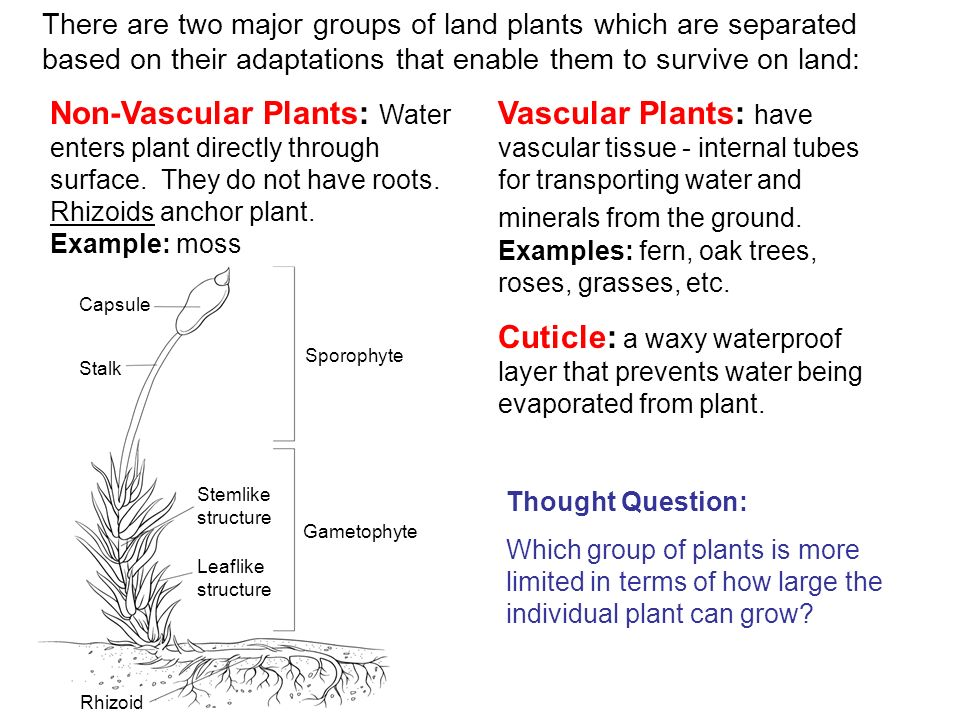 There are two major groups of land plants which are separated based on their adaptations that enable them to survive on land: