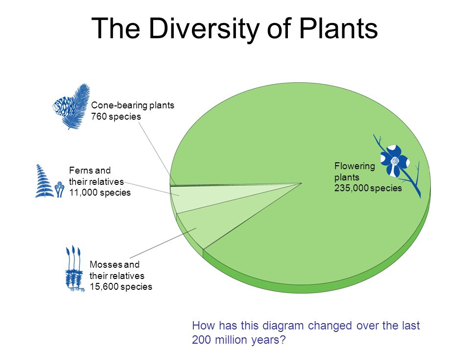 The Diversity of Plants