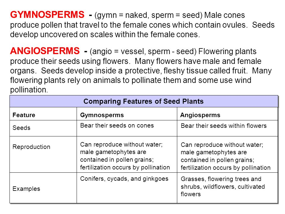 Comparing Features of Seed Plants