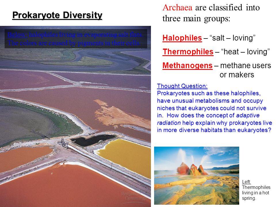 Archaea are classified into three main groups: Prokaryote Diversity