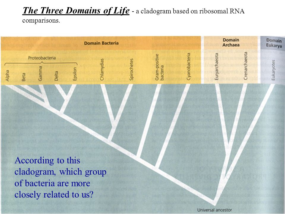 The Three Domains of Life - a cladogram based on ribosomal RNA comparisons.