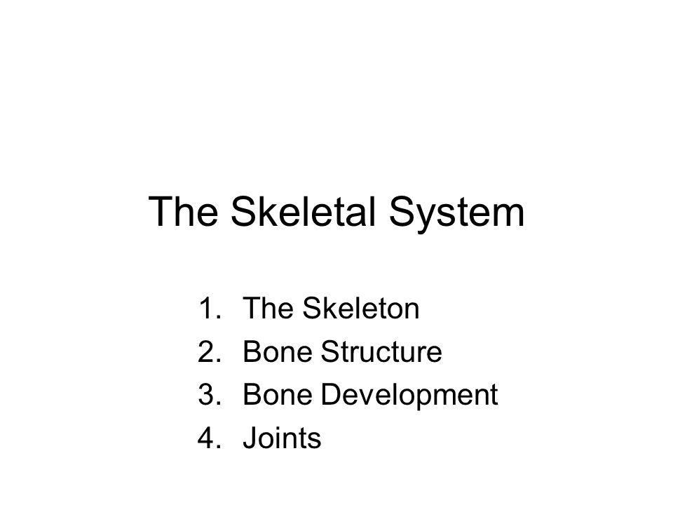 The Skeleton Bone Structure Bone Development Joints