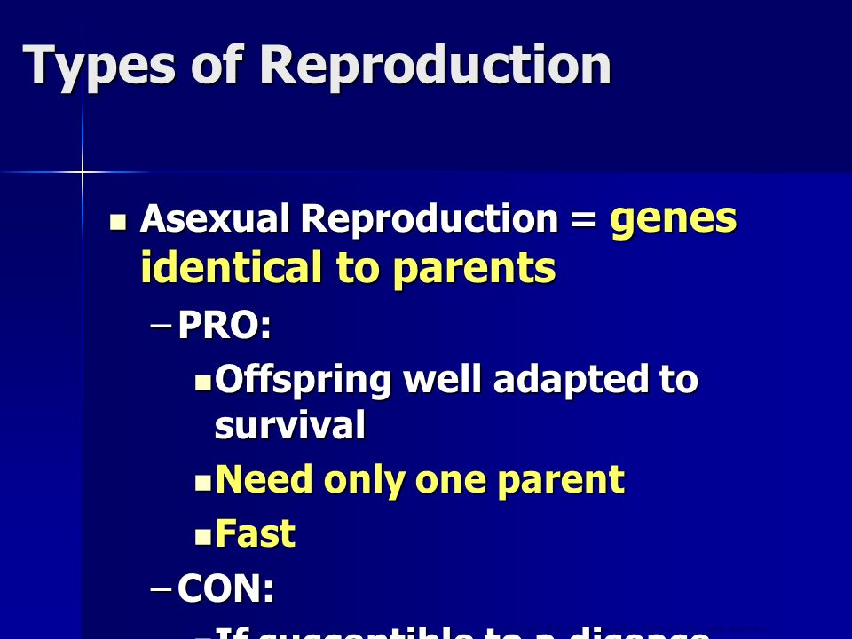 Types of Reproduction Asexual Reproduction = genes identical to parents. PRO: Offspring well adapted to survival.