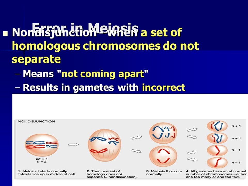 Error in Meiosis Nondisjunction - when a set of homologous chromosomes do not separate. Means not coming apart