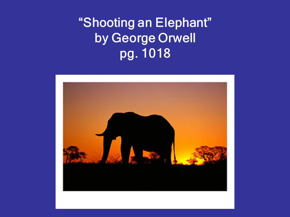 shooting the elephant essay Shooting an elephant is perhaps one of the most anthologized essays in the english language it is a splendid essay and a terrific model for a theme of narration.