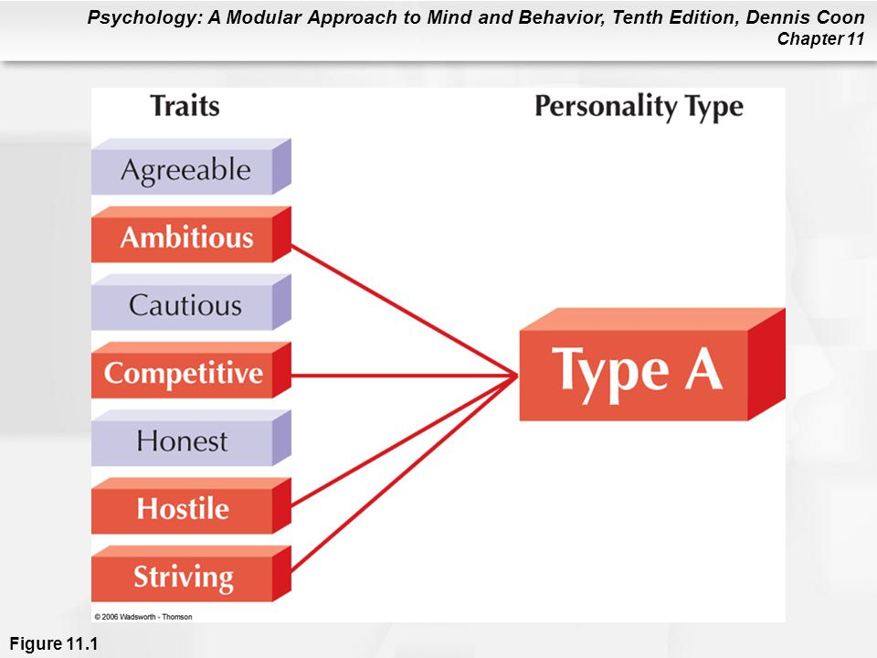 Figure 11.1 Personality types are defined by the presence of several specific traits. For example, several possible personality traits are shown in the left column. A person who has a Type A personality typically possesses all or most of the highlighted traits. Type A persons are especially prone to heart disease (see Chapter 12).