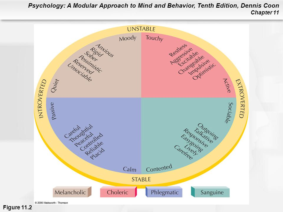 Figure 11.2 English psychologist Hans Eysenck (1916–1997) believed that many personality traits are related to whether you are mainly introverted or extroverted and whether you tend to be emotionally stable or unstable (highly emotional). These characteristics, in turn, are related to four basic types of temperament first recognized by the early Greeks. The types are: melancholic (sad, gloomy), choleric (hottempered, irritable), phlegmatic (sluggish, calm), and sanguine (cheerful, hopeful). (Adapted from Eysenck, 1981.)