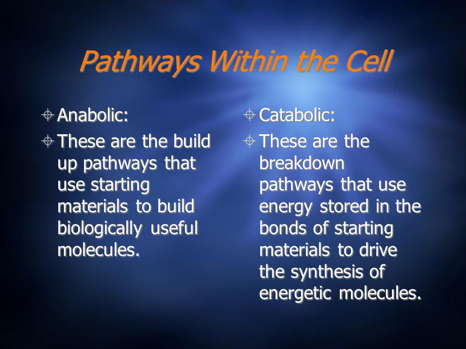 Pathways Within the Cell