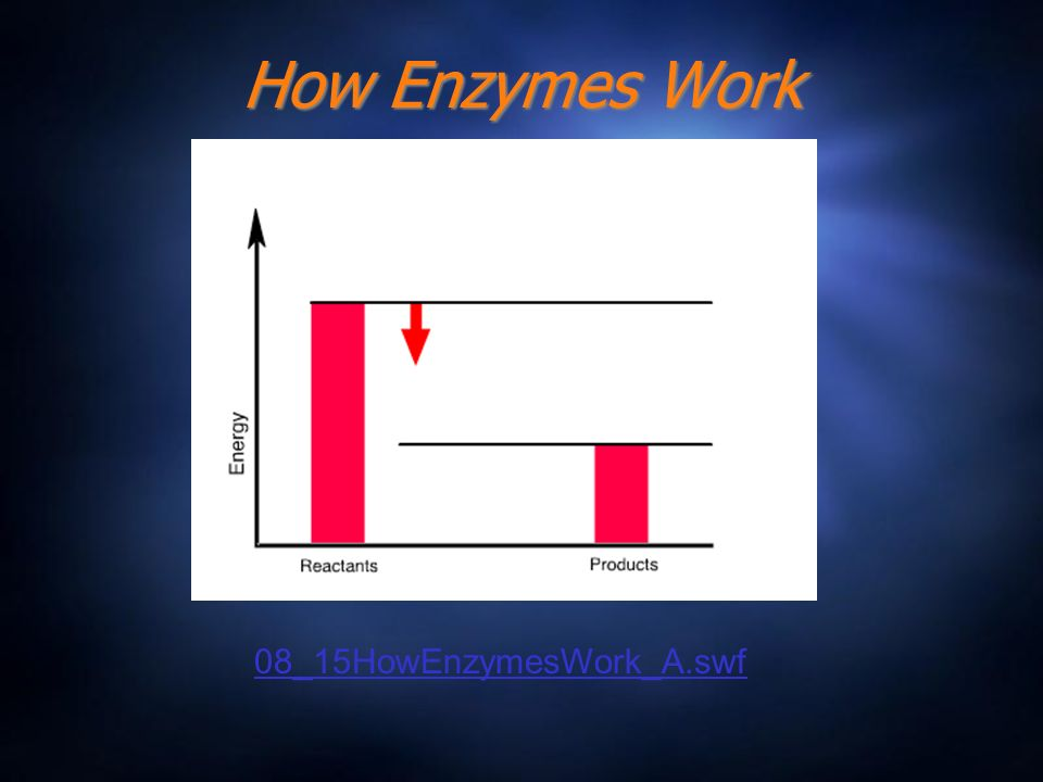 How Enzymes Work 08_15HowEnzymesWork_A.swf