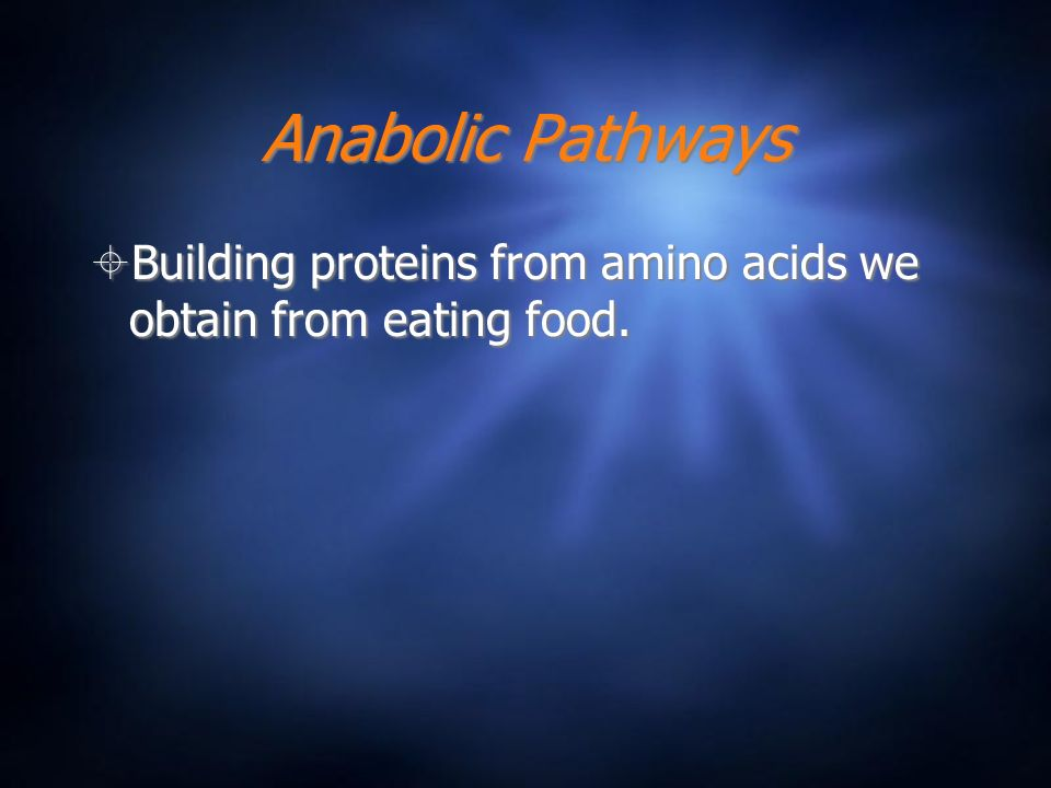 Anabolic Pathways Building proteins from amino acids we obtain from eating food.