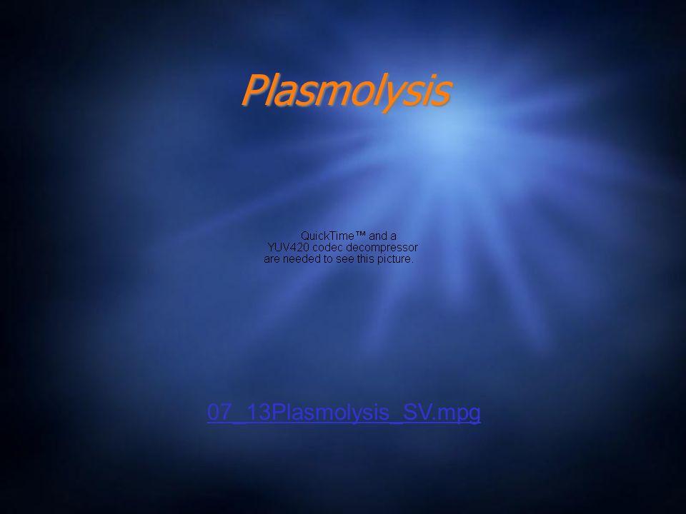 Plasmolysis 07_13Plasmolysis_SV.mpg