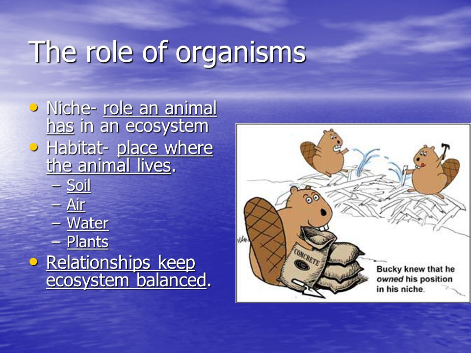 The role of organisms Niche- role an animal has in an ecosystem