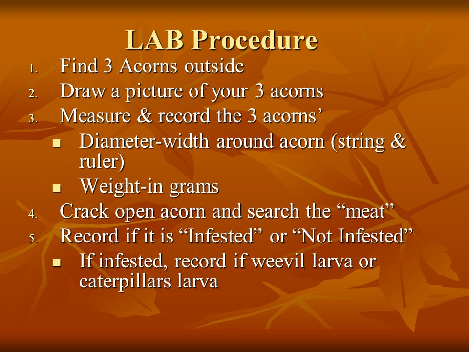 LAB Procedure Find 3 Acorns outside Draw a picture of your 3 acorns